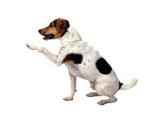 Preparat dla psa na stawy