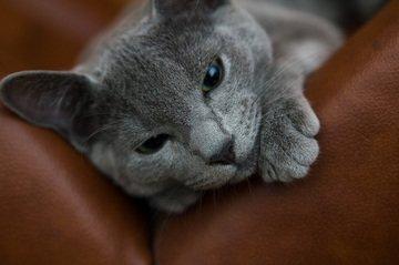 Drapaki dla kotów Kraków